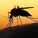 Santé des voyageurs : fièvre jaune et malaria